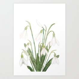 white snowdrop flower watercolor Art Print