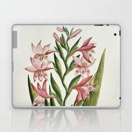 Robert Jacob Gordon - Gladiolus carneus D. Delarochev - 1777 - 1786 Laptop & iPad Skin