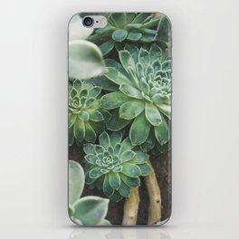Botanical Gardens - Succulent #625 iPhone Skin