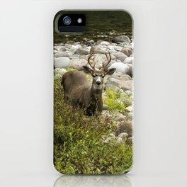 Handsome Deer on an Island No. 2 iPhone Case