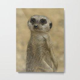 Frank the meerkat Metal Print