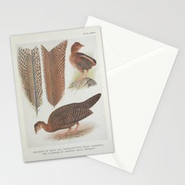 Vintage Print - A Monograph of the Pheasants (1922) - Argus Pheasant Primaries and Plumages Stationery Cards