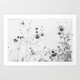 Sun Spots Art Print