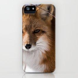 Le regard de la renarde iPhone Case
