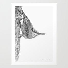 Friendly Nuthatch Art Print