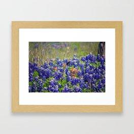Butterfly and Bluebonnets Framed Art Print
