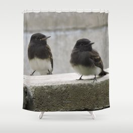 Young Black Phoebes Shower Curtain