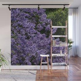 Flowering Jacarada Tree Wall Mural