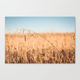 Reaping Time Canvas Print