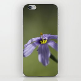 Blue-Eyed Grass iPhone Skin