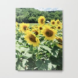 The Sunflowers of Biltmore Metal Print