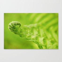Fern Leaf Curl, Green Nature / Botanical Photograph Canvas Print
