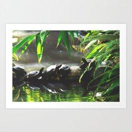 Turtle Life Art Print
