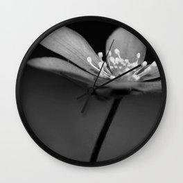 Blue spring flower Hepatica in bw III Wall Clock