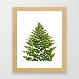 Lady Fern Botanical Framed Art Print