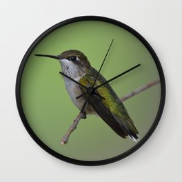 Ruby Throated Humming Bird At Rest Wall Clock