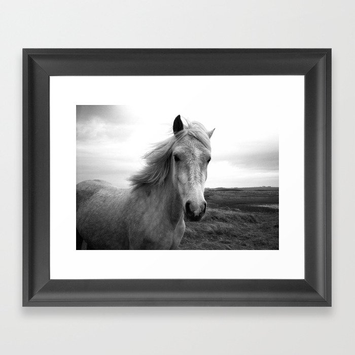 white horse Framed Art Print by richardpjlambert | Society6