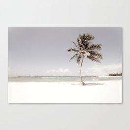 A Typical Beach Palm Canvas Print