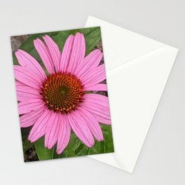 Spring coneflower Stationery Cards