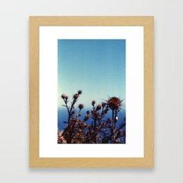 Sun-Bleached Blossom Framed Art Print