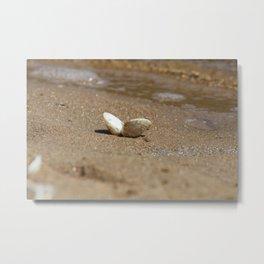 Pippy Shell Metal Print