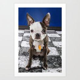 Murphy June- Boston Terrier Art Print
