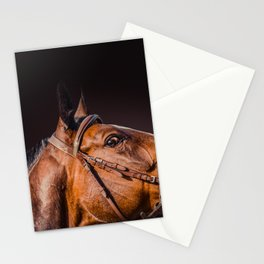 Horse portrait over a dark background. Closeup Horse Head. Stationery Cards