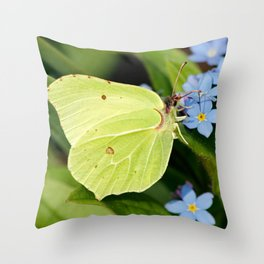 Brimstone Flutterby Throw Pillow