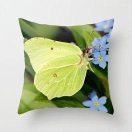 Brimstone Flutterby Throw Pillow