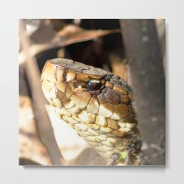 Watercolor Snake, Water Moccasin 02, Merchants Millpond, North Carolina Metal Print