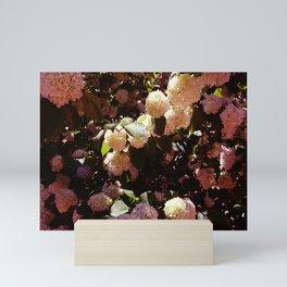 Pink Snowballs II Mini Art Print