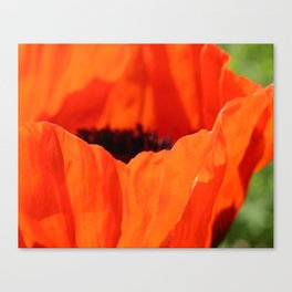 Up Close with the Poppy Canvas Print