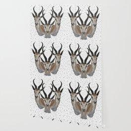 Springbok Wallpaper
