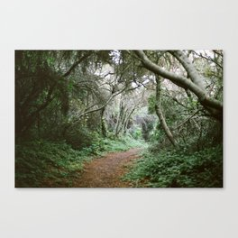 Tree Tunnel in the Forest - 35mm Film Canvas Print