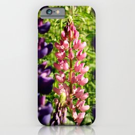 Lupins at Arrowtown iPhone Case