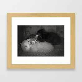 2 Weeks Old Framed Art Print