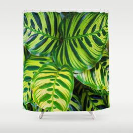 Leaf 1 Shower Curtain