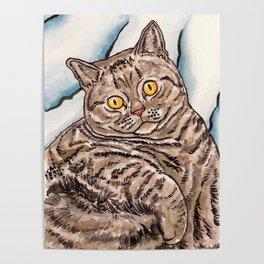 Grey Cat Poster