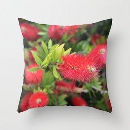 Flowering Callistemon Throw Pillow