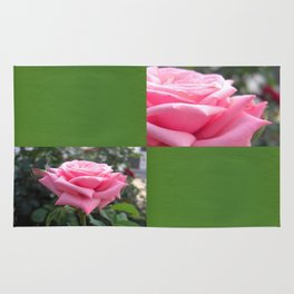 Pink Roses in Anzures 6 Blank Q5F0 Rug