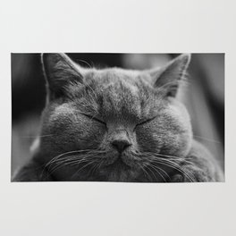 Cat, Cats - Love Cats Rug