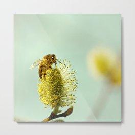 Honey Bee on spring Metal Print