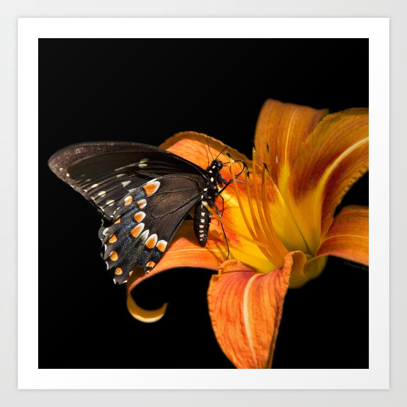 Black Butterfly Art Print By Christinarollo Society6