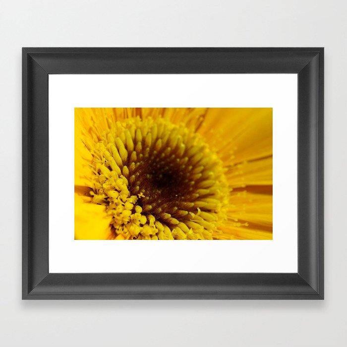 Daisy Gold 2 Framed Art Print