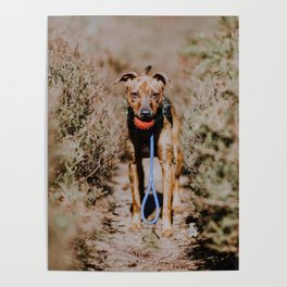 Dog by Mitchell Orr Poster