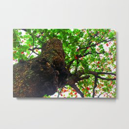 big tree with green leaves and red leaves Metal Print