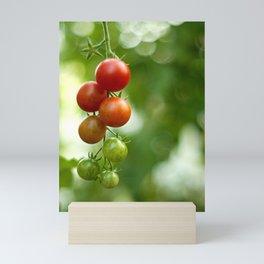 Tomatoes Mini Art Print