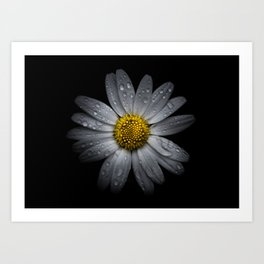 Backyard Flowers 16 Color Version Art Print