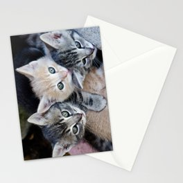 Kittens, 3 balls of tenderness Stationery Cards