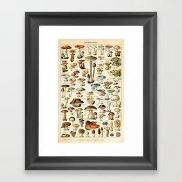Vintage Mushroom & Fungi Chart by Adolphe Millot Framed Art Print